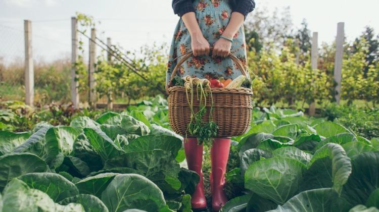 Bahan Makanan Organik