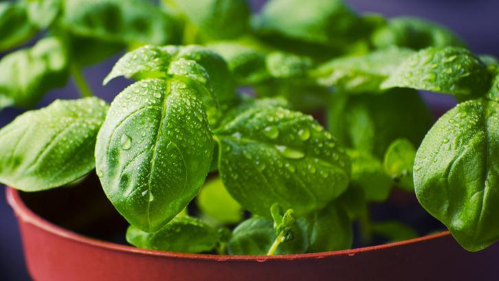 5 Tanaman Sayur Untuk Berkebun Di Rumah Rumah Dan Gaya