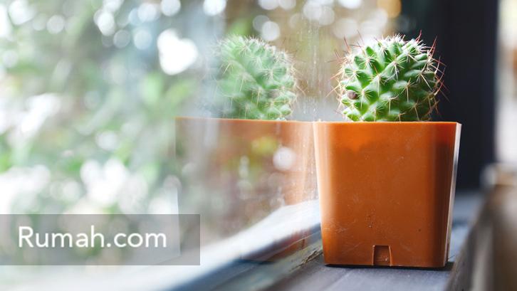 Gaya Baru Menata Kaktus Dalam Ruang