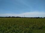 Tanah komersial di jalan gatot subroto, Indramayu