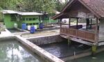 Tanah dan kolam ikan
