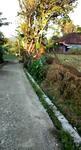 Tanah Sawah 989 m2 Dekat Masjid Daerah Kiarapedes Wanayasa Purwakarta