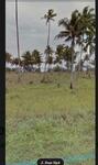 Dijual Tanah di Pinggir Pantai Belitung