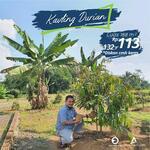 Kavling Durian  Cigalontang