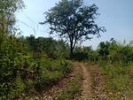 Dijual tanah murah 2 Hektar di Kerjo Karanganyar