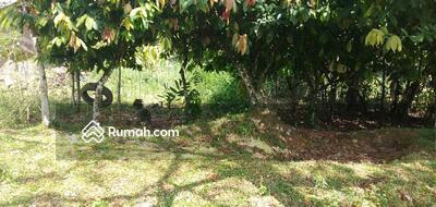 Dijual - Kebun banyak pohon kelapa