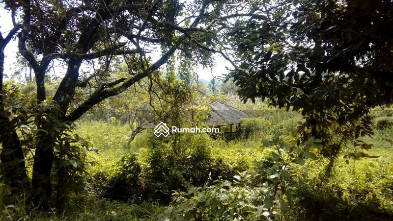 Kebun banyak pohon kelapa #100318338