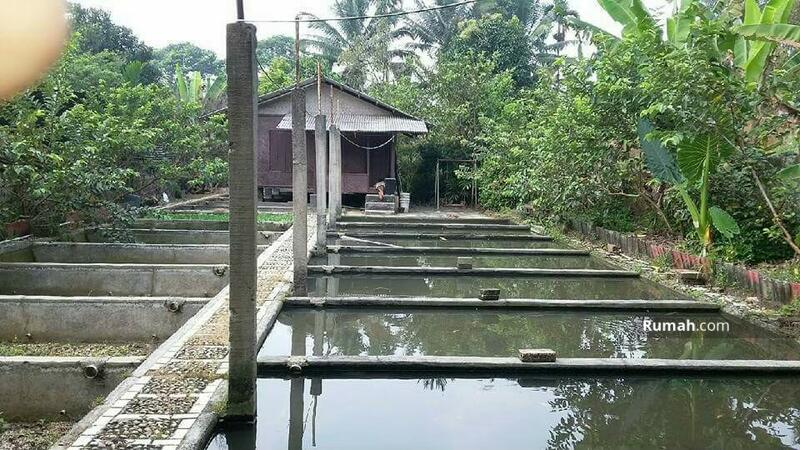 villa dan lahan #101089502