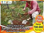 Jual Kavling Produktif, Bonus Pohon Jambu Kristal & Durian
