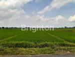 Tanah Dijual Latsari Mojokerto