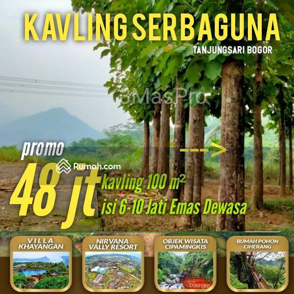 Tanah Murah SHM Pinggir Jalan Provinsi Bonus Kebun Jati #104629142