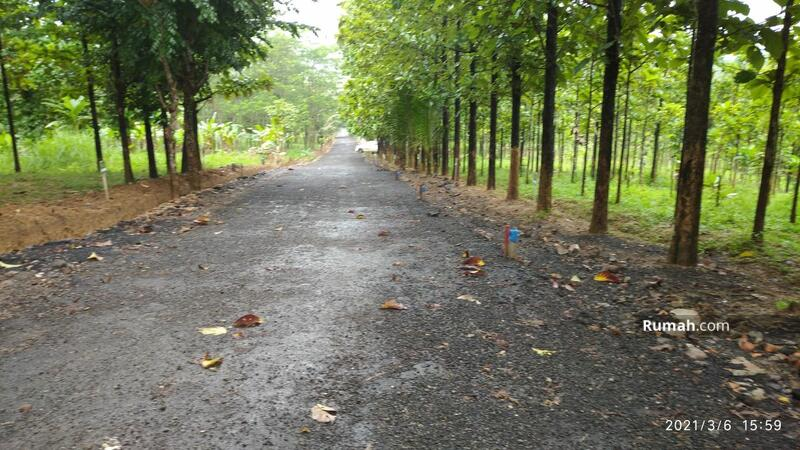 Tanah Kavling 48 Juta di Bogor Timur, View Pegunungan & Jati, Cocok Untuk Villa & Kebun #106635242