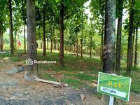 Dijual - Tanah Kavling 48 Juta di Bogor Timur, View Pegunungan & Jati, Cocok Untuk Villa & Kebun