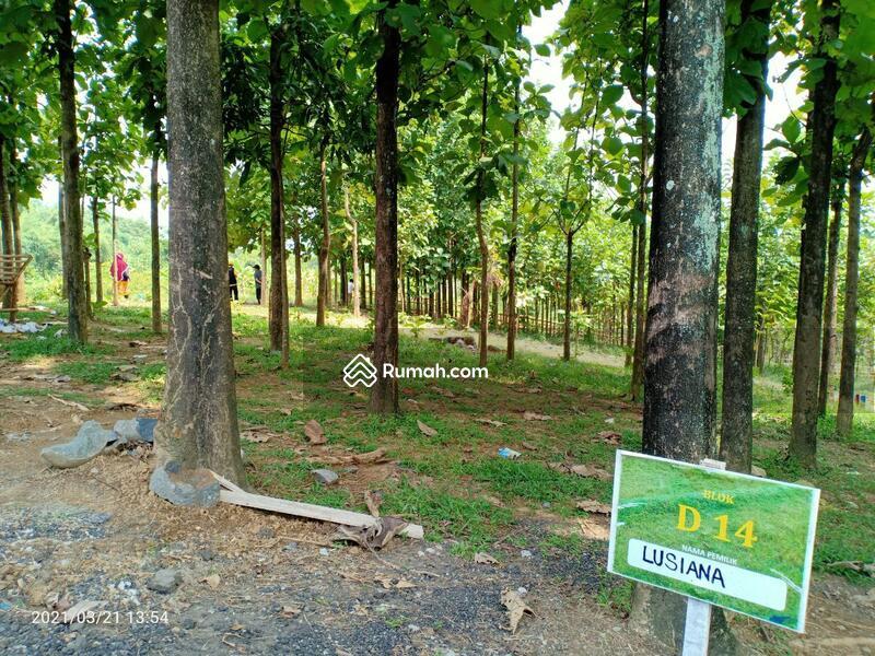 Tanah Kavling 48 Juta di Bogor Timur, View Pegunungan & Jati, Cocok Untuk Villa & Kebun #106635258