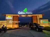 Dijual - Golden flower Parung panjang